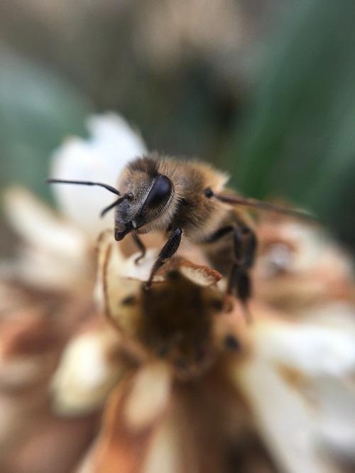 Les abeilles un  modèle pour le manager en réunion