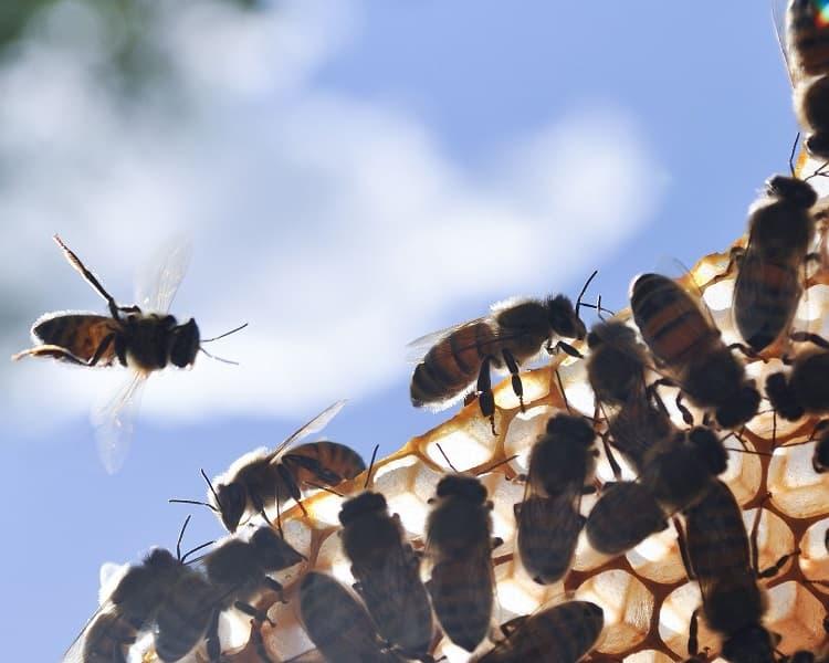 La polyvalence des abeilles au service du bien commun