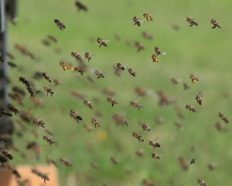 Team building avec les abeilles