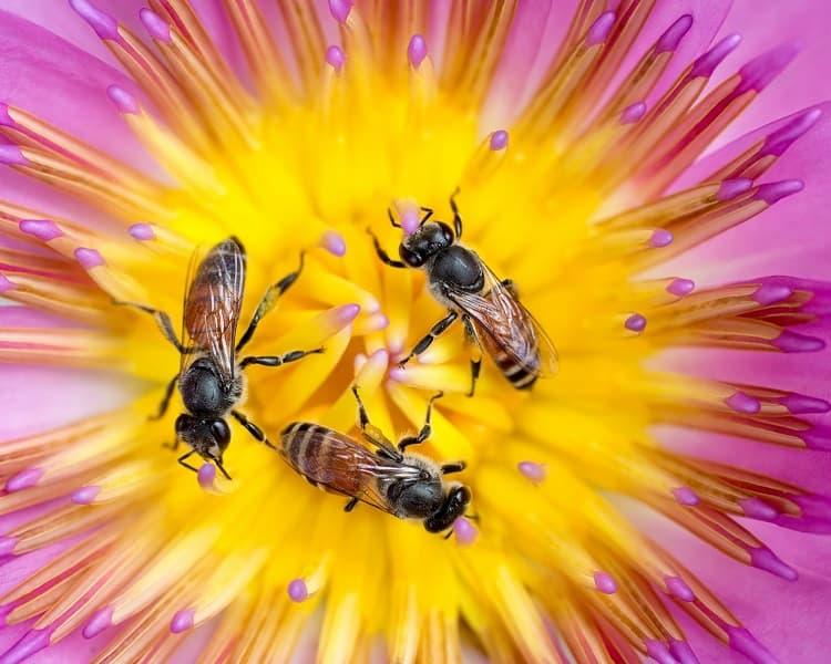 L'intelligence collaborative des abeilles